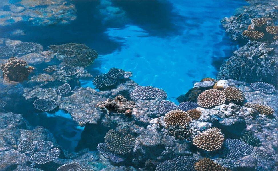 橋本直行 珊瑚礁